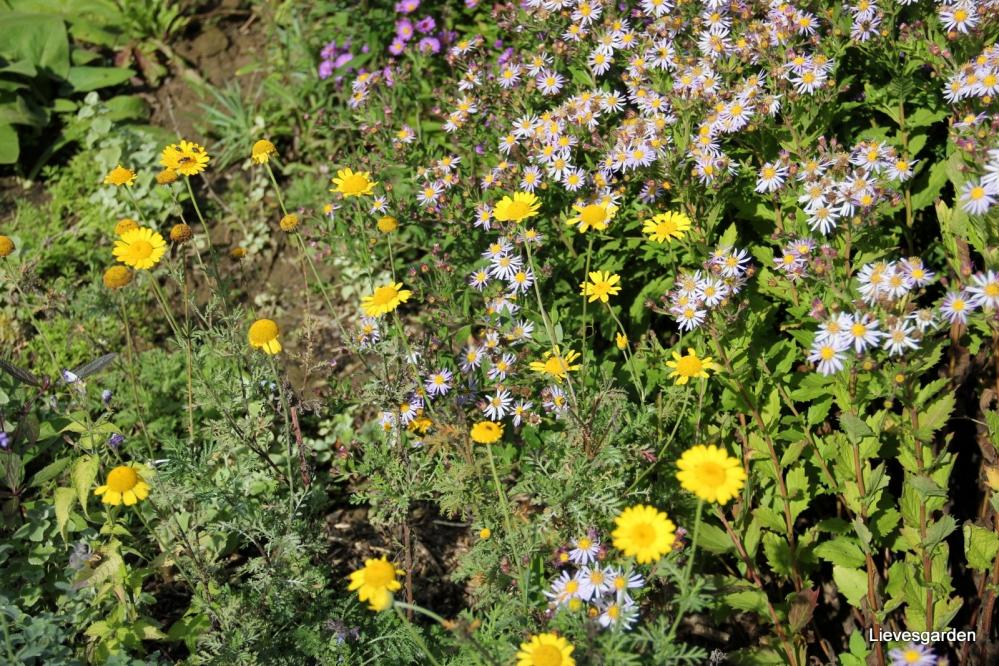 1-Insectenborder eind september (20).JPG