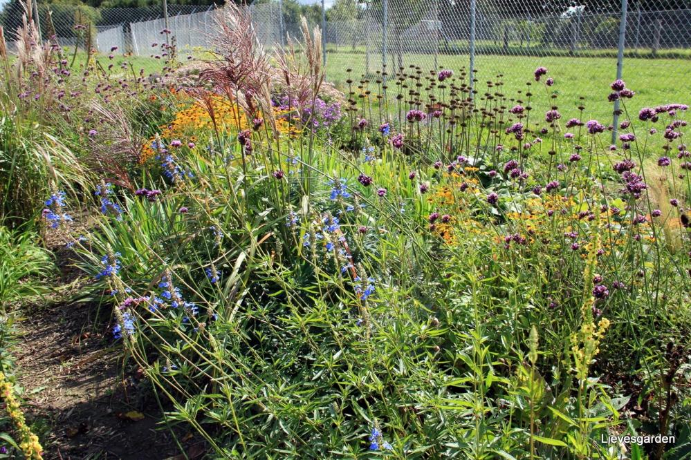 insectenborder in de herfst,vlindertuin in de herfst,herfstbloeiers,herfstcombinaties