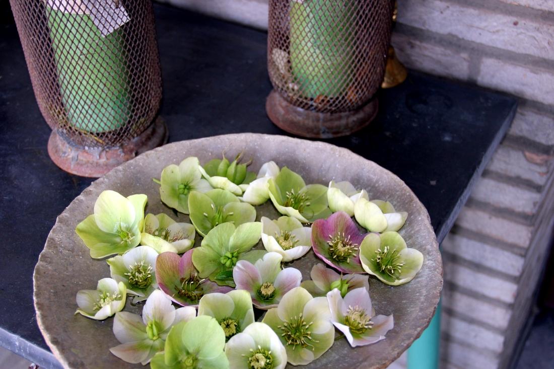 Schotel met helleborus orientalis