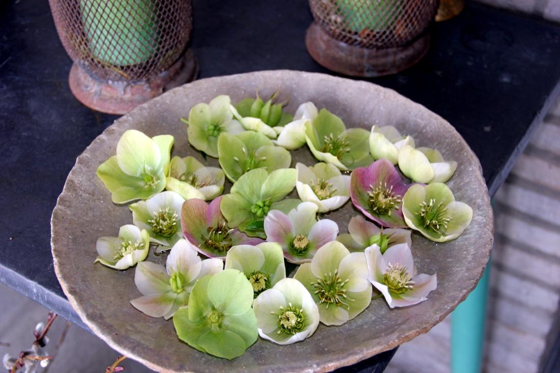 Schaal met helleborus orientalis